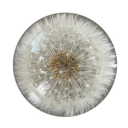 Dandelion Paperweight Feature Image